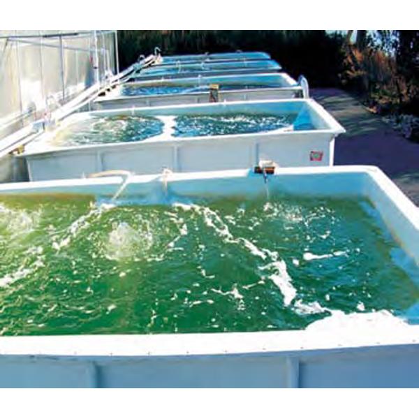 单细胞海藻破壁为十分好看的绿色